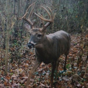 Indiana Public land Bucks